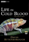 LIFE IN COLD BLOOD [2 DVDS] - DVD - Tiere