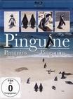 PINGUINE - BLU-RAY - Tiere