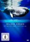 WILDER OZEAN - IM REICH DER POTTWALE - DVD - Tiere