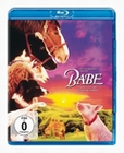 EIN SCHWEINCHEN NAMENS BABE - BLU-RAY - Komdie