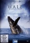 WALE - DIE LETZTEN GIGANTEN - DVD - Tiere