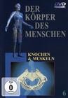 DER KÖRPER DES MENSCHEN 6 - DVD - Mensch