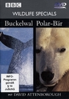 WILDLIFE SPECIALS - BUCKELWAL/POLARBÄR - DVD - Tiere