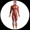 ANATOMIE KOSTÜM MUSKELN - BODYSUIT - ANATOMY MAN - Kostueme - Körperanzüge
