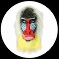 PAVIAN MASKE MANDRILL BUNT - Masks - Tiermasken