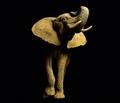 FOTOTAPETE ELEFANT VLIES - ELEPHANT - Interior - Fototapeten - Natur